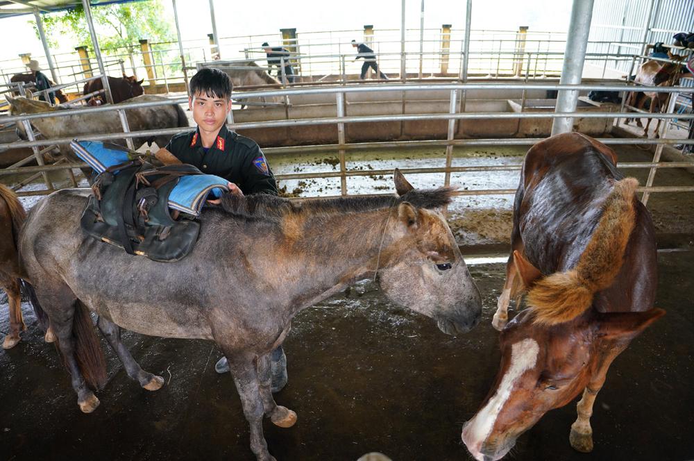 Cảnh sát cơ động Kỵ binh huấn luyện ngựa nghiệp vụ ảnh 21