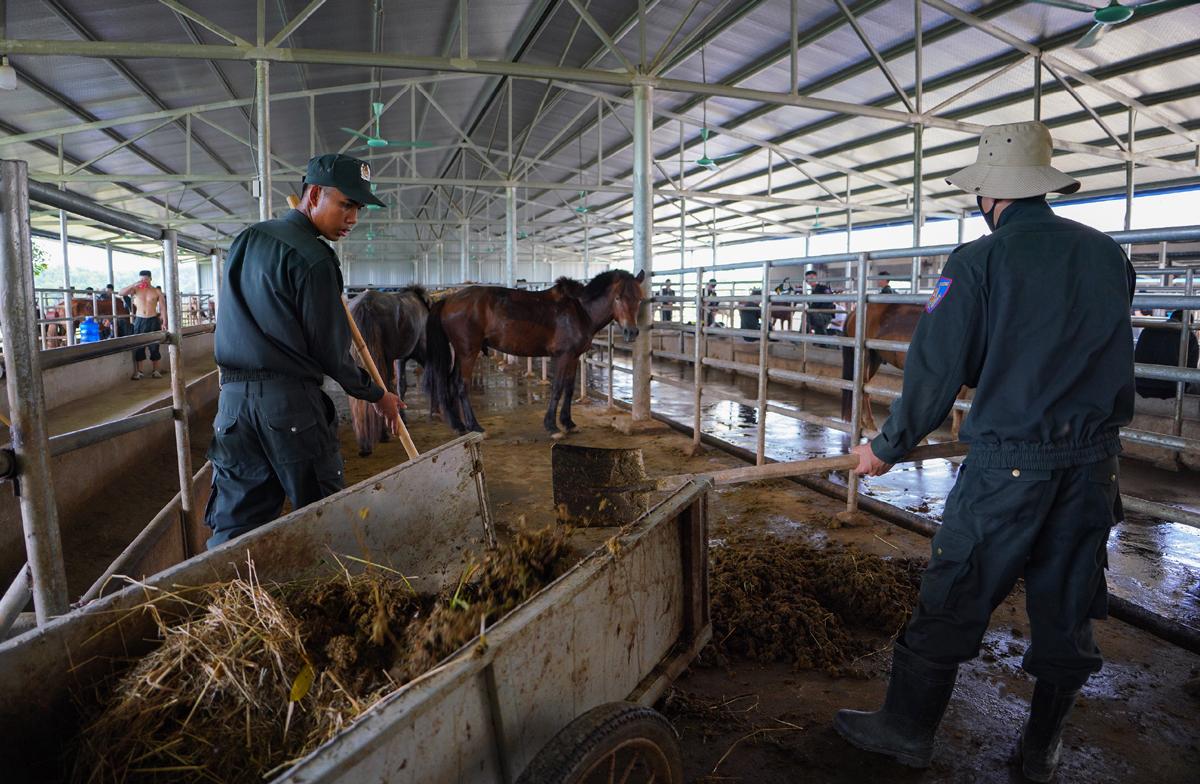 Cảnh sát cơ động Kỵ binh huấn luyện ngựa nghiệp vụ ảnh 22