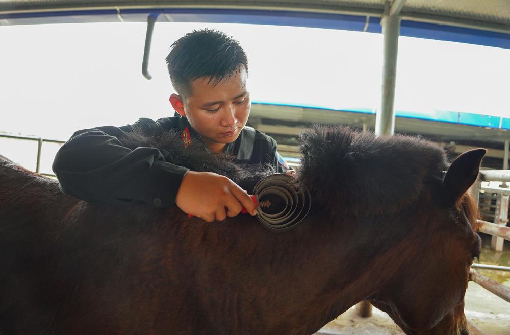 Cảnh sát cơ động Kỵ binh huấn luyện ngựa nghiệp vụ ảnh 24