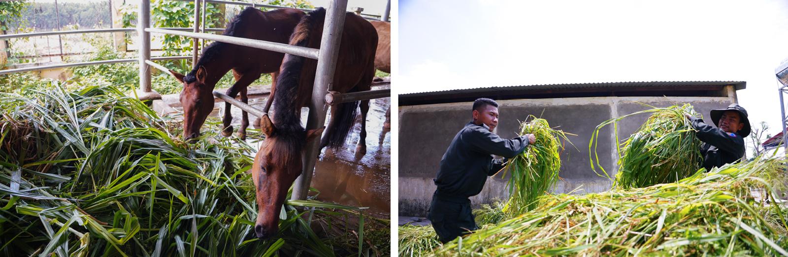 Cảnh sát cơ động Kỵ binh huấn luyện ngựa nghiệp vụ ảnh 25