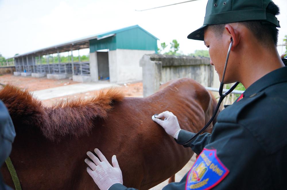 Cảnh sát cơ động Kỵ binh huấn luyện ngựa nghiệp vụ ảnh 27