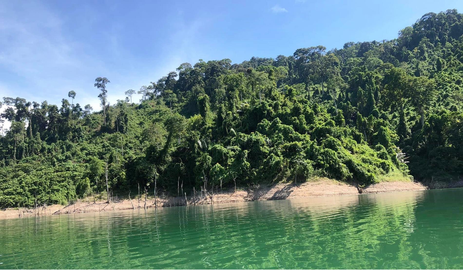 Trải nghiệm du lịch bảo vệ rừng ảnh 25
