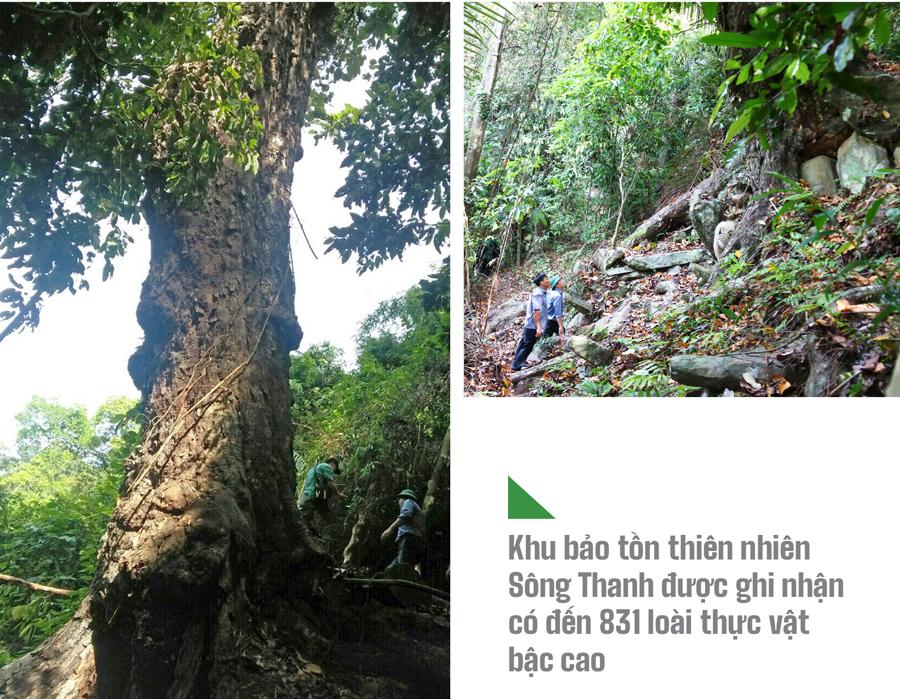 Trải nghiệm du lịch bảo vệ rừng ảnh 5