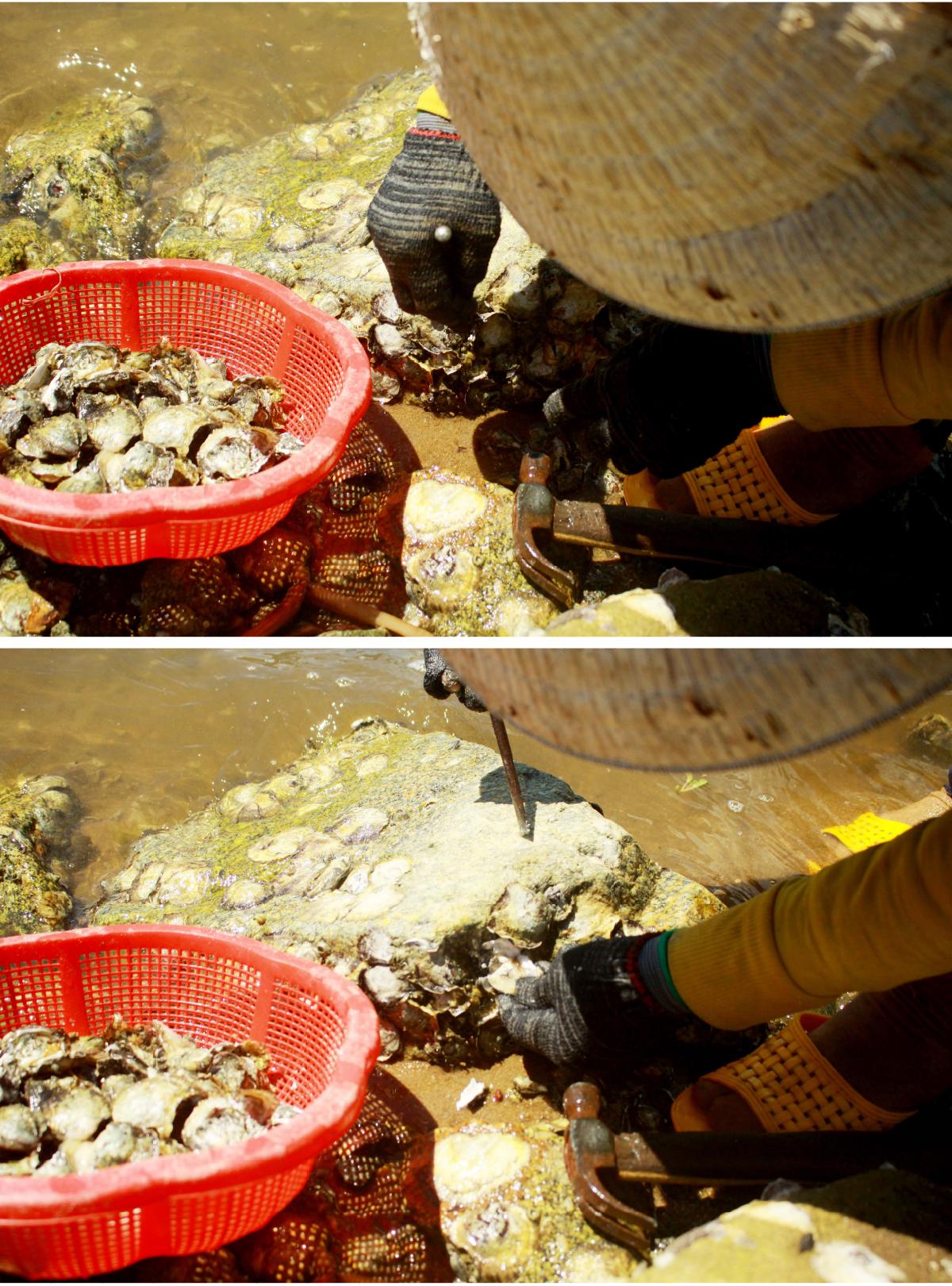 Nhọc nhằn nghề đẽo đá, đục hàu nơi cửa biển  ảnh 12