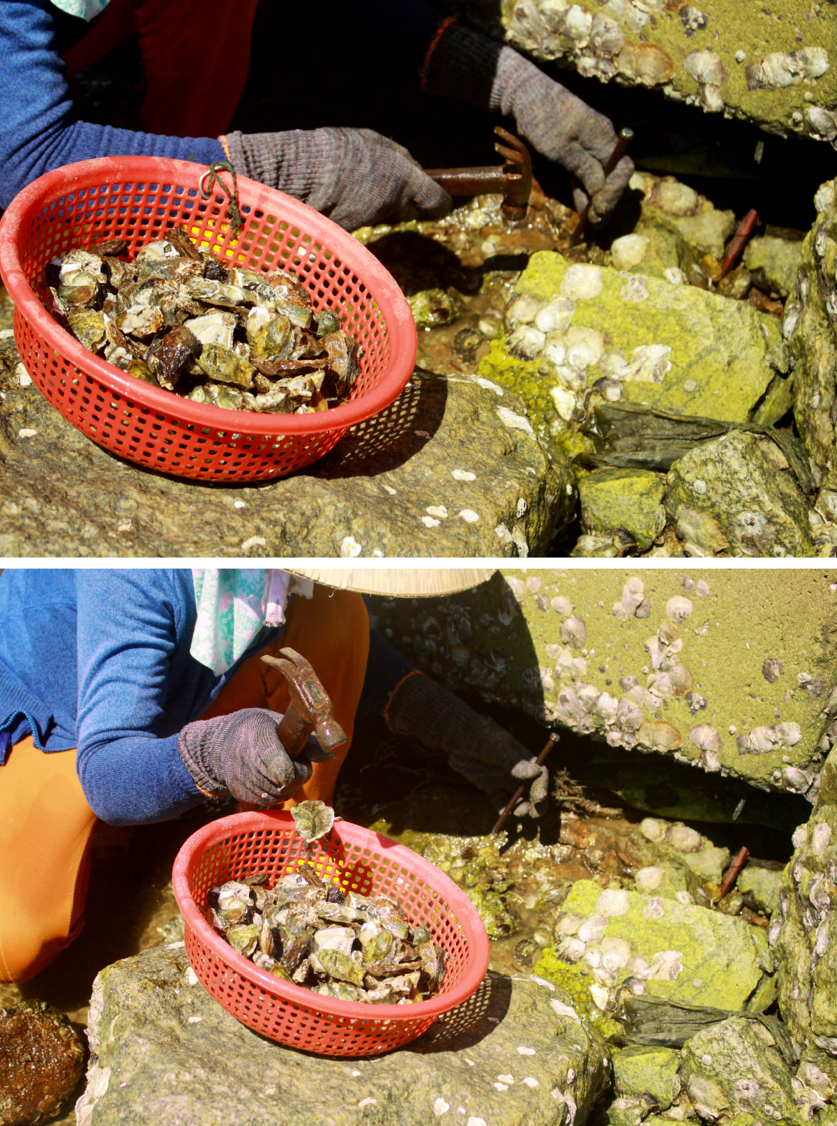 Nhọc nhằn nghề đẽo đá, đục hàu nơi cửa biển  ảnh 15