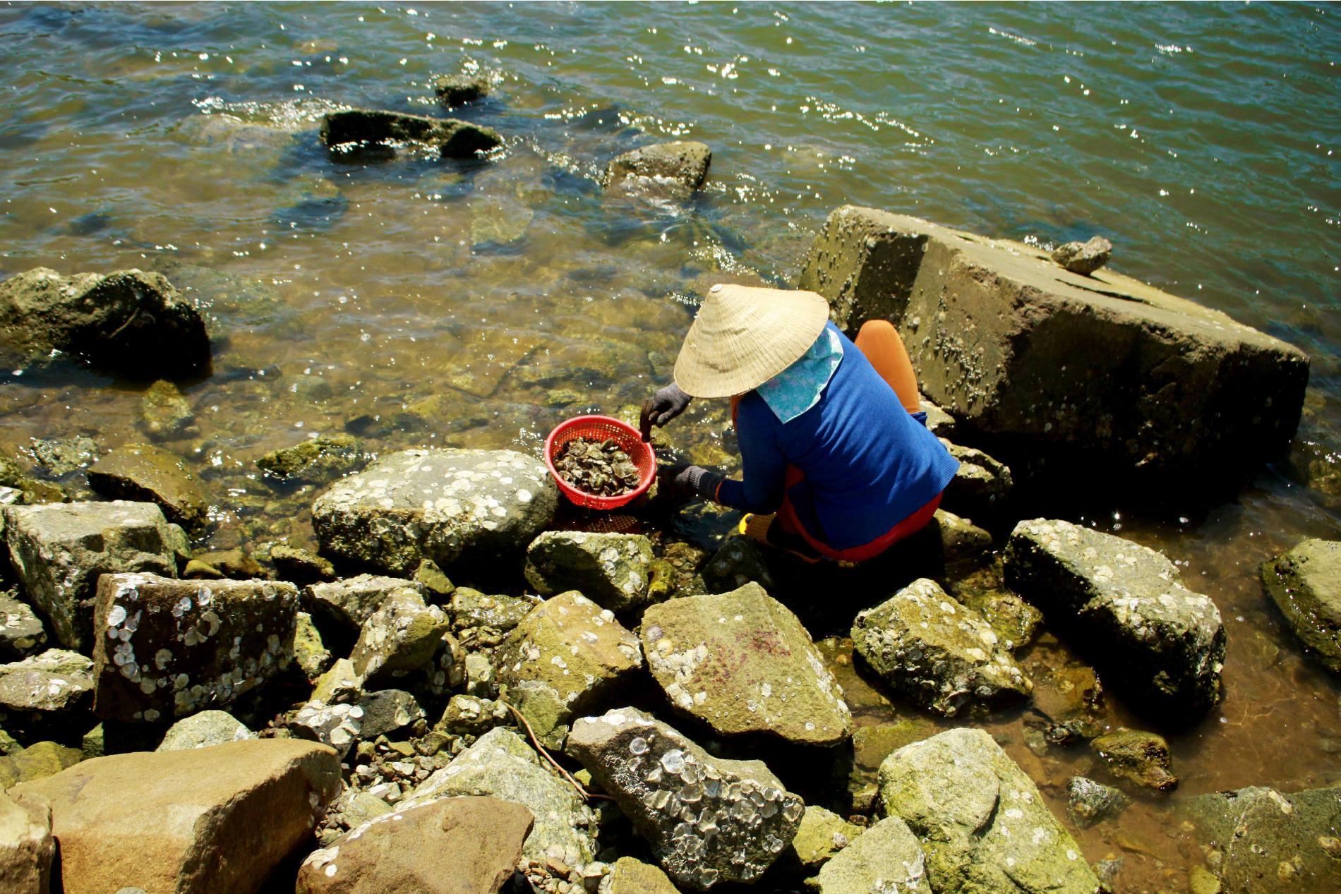 Nhọc nhằn nghề đẽo đá, đục hàu nơi cửa biển  ảnh 17