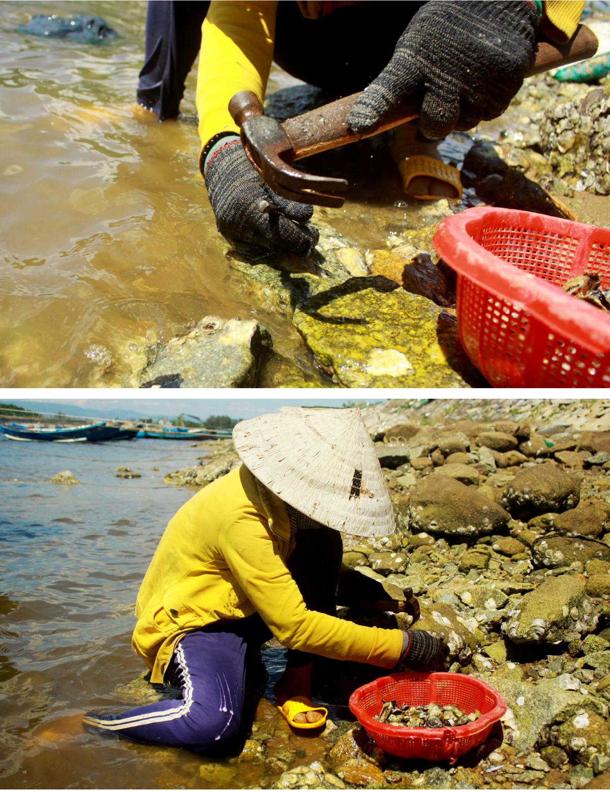 Nhọc nhằn nghề đẽo đá, đục hàu nơi cửa biển  ảnh 8