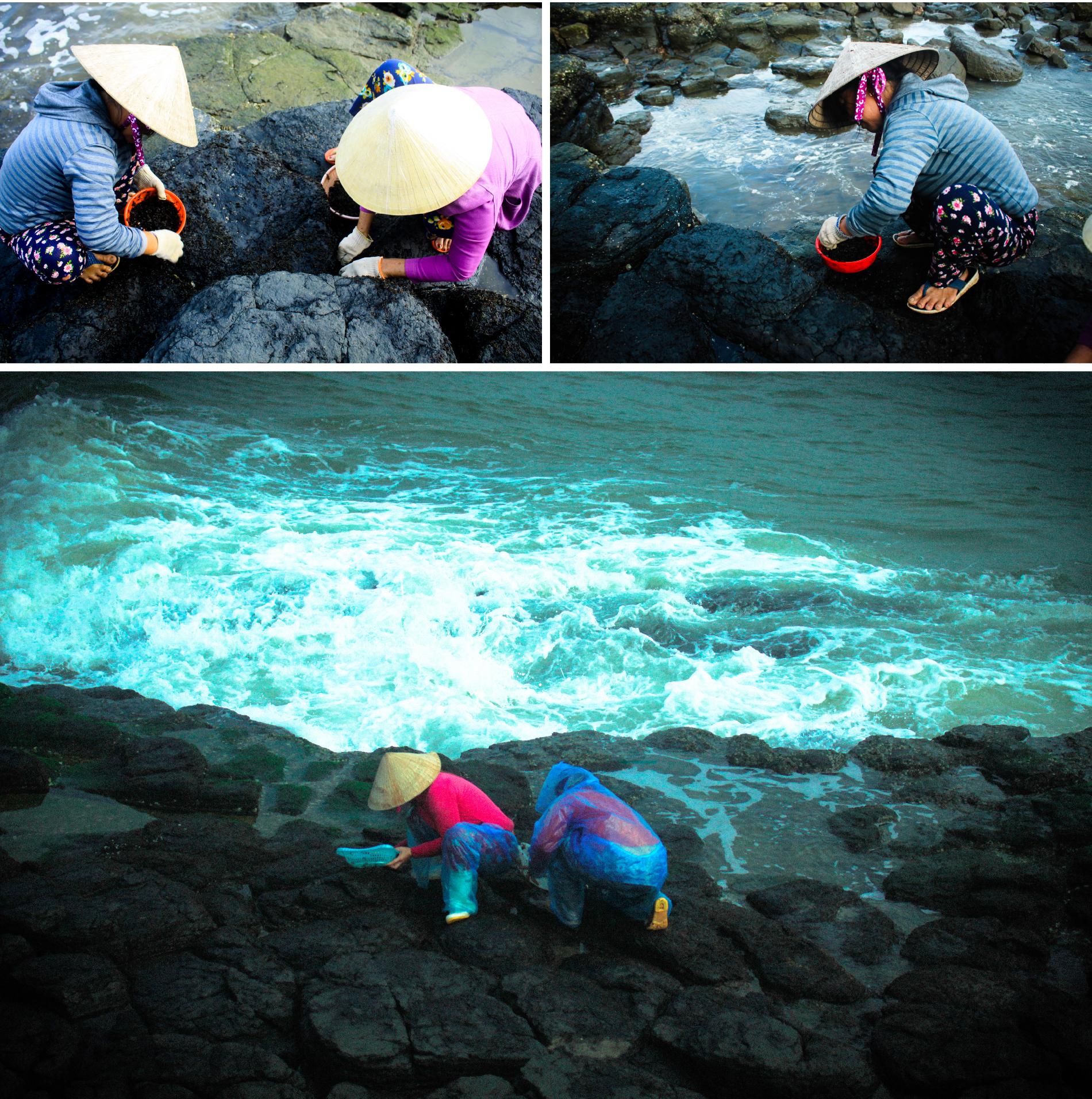 'Lộc biển' trên gành đá ảnh 12