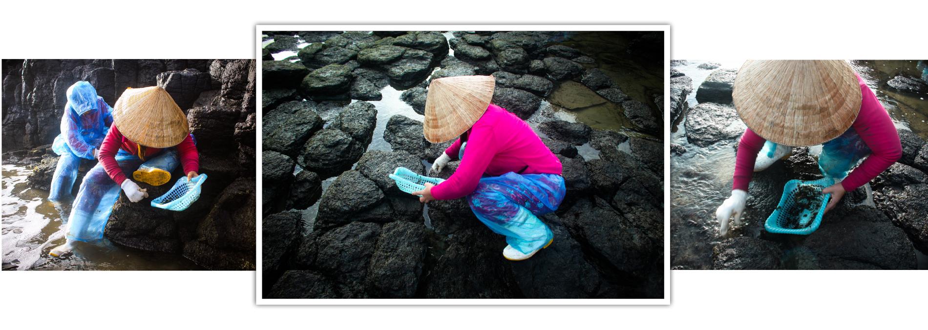 'Lộc biển' trên gành đá ảnh 14