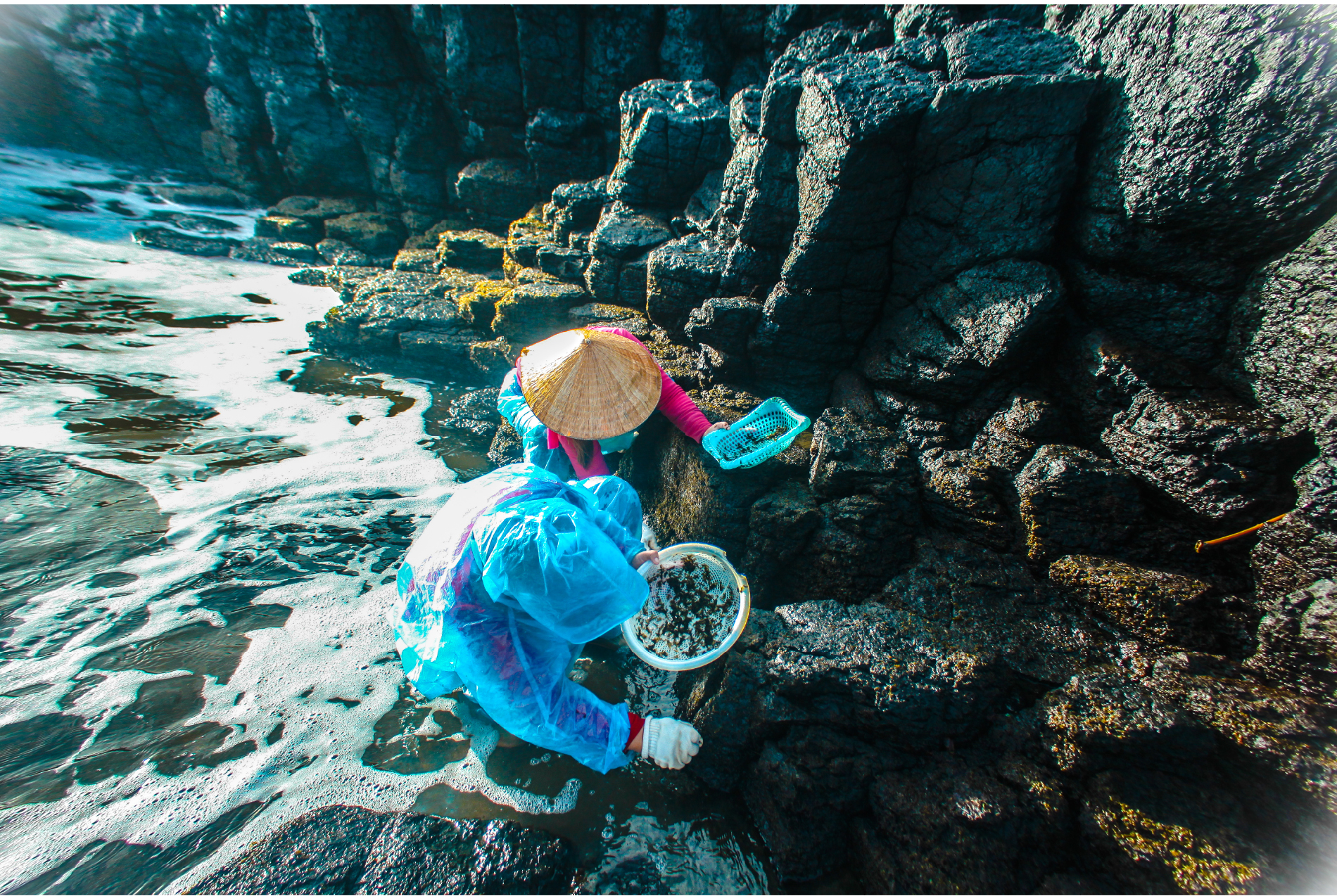'Lộc biển' trên gành đá ảnh 16