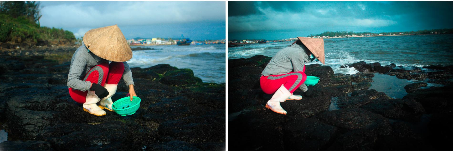 'Lộc biển' trên gành đá ảnh 5