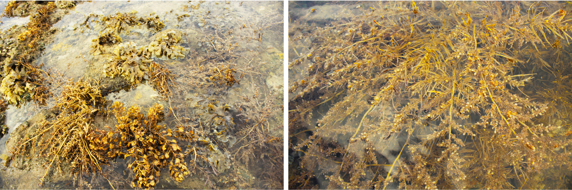 Vẻ đẹp của rong mơ biển trong mùa thu hoạch ảnh 29