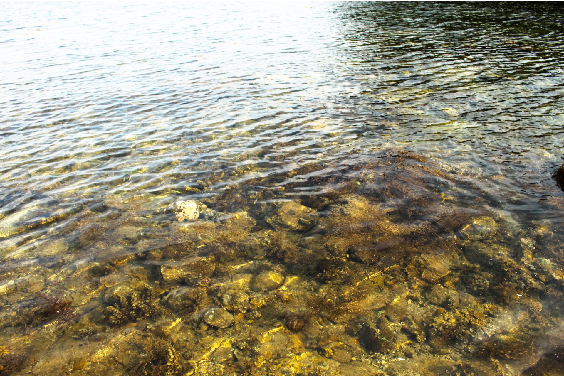 Vẻ đẹp của rong mơ biển trong mùa thu hoạch ảnh 30