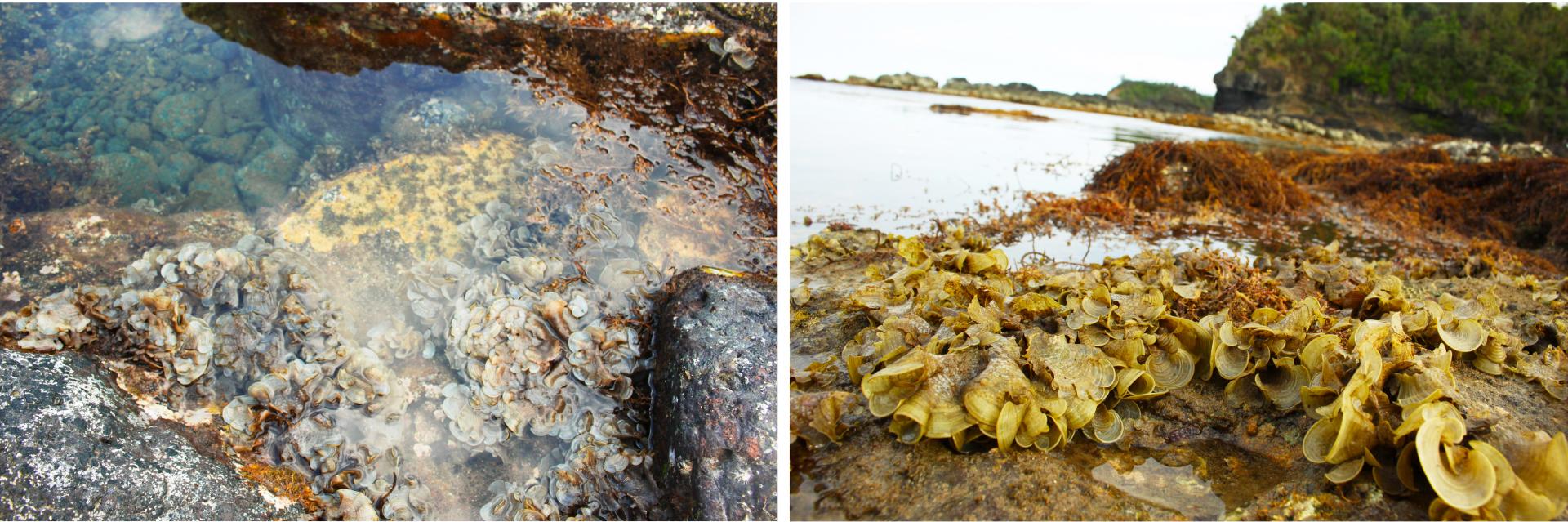 Vẻ đẹp của rong mơ biển trong mùa thu hoạch ảnh 34