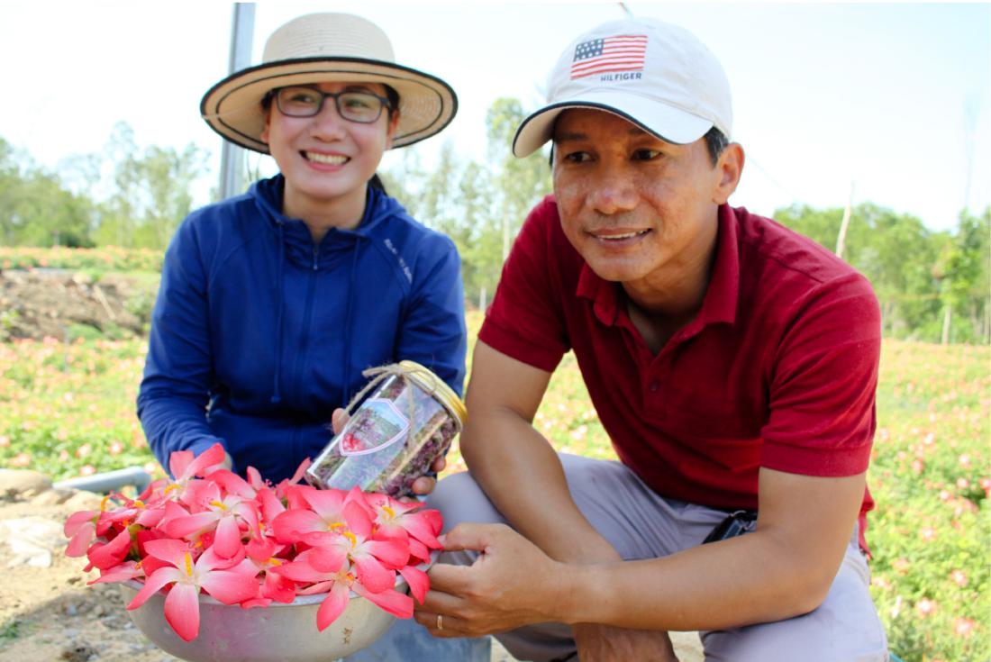 Sâm Bố Chính nở hoa rực rỡ trên đất Quảng Ngãi ảnh 39