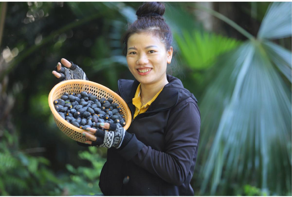 Hà Tĩnh vào mùa thu hoạch quả trám đen ảnh 30