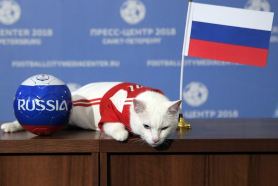 Chú mèo Achilles chọn Nga thắng trận ra quân.
