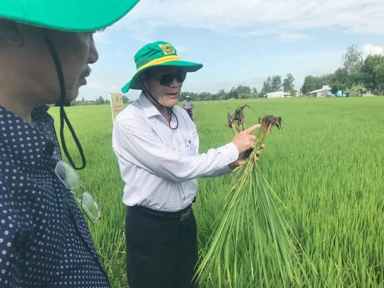 Canh tác lúa thông minh ở ĐBSCL: Nông dân Bạc Liêu, Kiên Giang và Bến Tre tự tin làm chủ vụ mùa ảnh 3