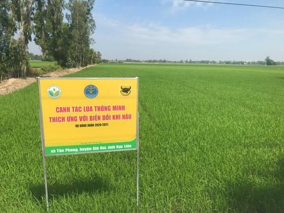 Canh tác lúa thông minh ở ĐBSCL: Nông dân Bạc Liêu, Kiên Giang và Bến Tre tự tin làm chủ vụ mùa ảnh 2