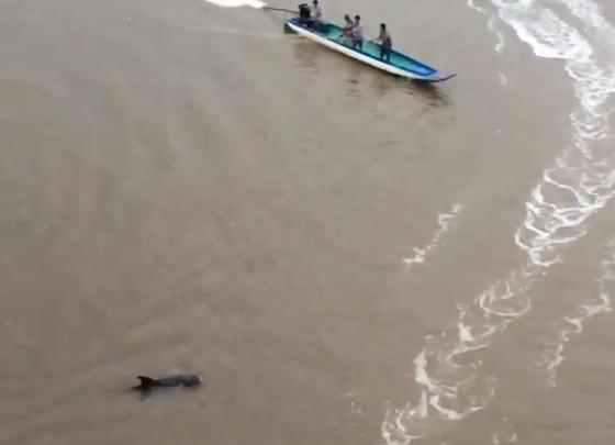 Cá heo xuất hiện trên sông Bảy Háp, Cà Mau ảnh 1