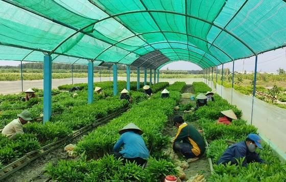 Cà Mau phát triển bền vững kinh tế rừng  ảnh 1
