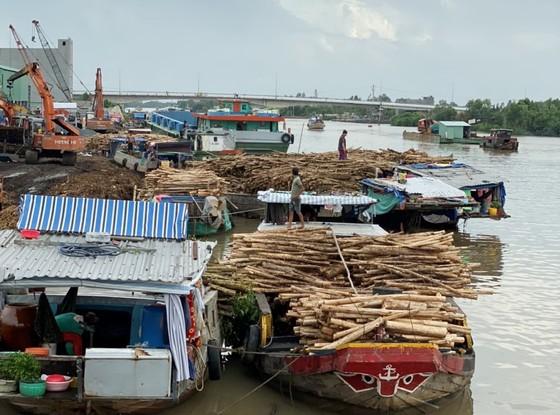 Cà Mau phát triển bền vững kinh tế rừng  ảnh 2