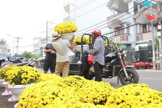 Người dân TPHCM tất bật lựa hoa kiểng đón Tết ảnh 1