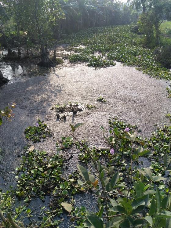 Kiểm tra một công ty về dấu hiệu xả thải gây ô nhiễm kênh rạch ảnh 3