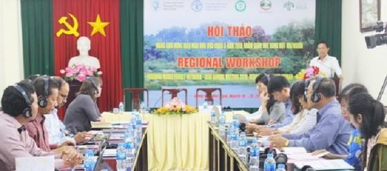 Hội thảo quốc tế về rừng, ngăn xung đột giữa người và voi ảnh 1