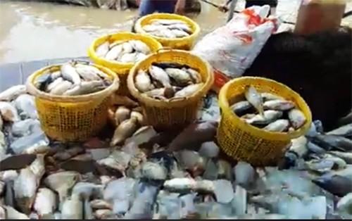 Hàng trăm tấn cá bè trên sông La Ngà chết không rõ nguyên nhân ảnh 1
