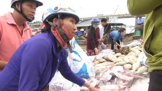 Hàng trăm tấn cá bè trên sông La Ngà chết không rõ nguyên nhân ảnh 2