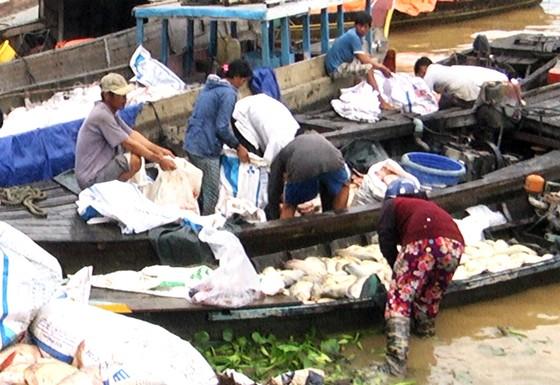 Hàng trăm tấn cá bè trên sông La Ngà chết không rõ nguyên nhân ảnh 3