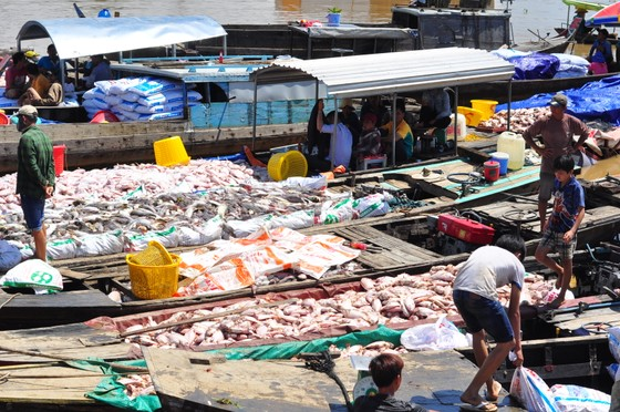 Đã có hơn 1.500 tấn cá bè trên sông La Ngà bị chết ảnh 5