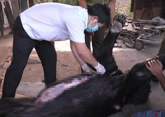 Bốn cá thể gấu ở Đồng Nai chết bất thường ảnh 1