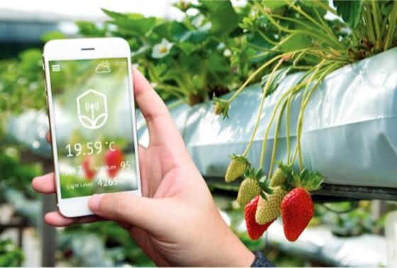 VNPT hợp tác với Lộc Trời phát triển nông nghiệp thông minh   ảnh 2