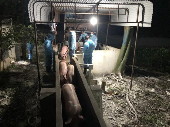 Hơn 300 heo giống Thái Lan đầu tiên nhập về Đồng Nai ảnh 4