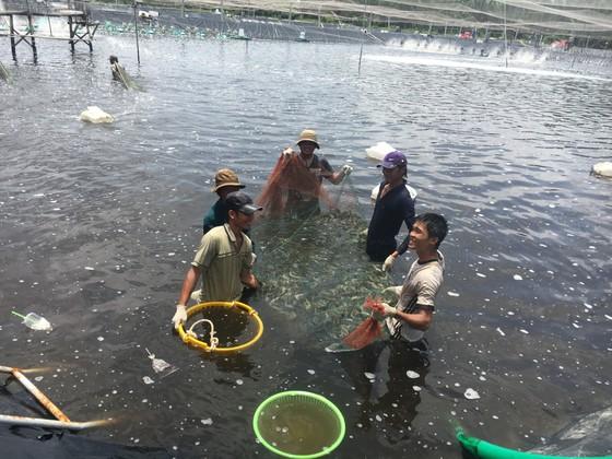 Chăn nuôi, thủy sản đang thua lỗ hàng tỷ đồng do dịch Covid-19 ảnh 1