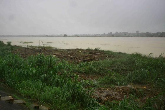 Người dân Quảng Ngãi liều mình vớt củi giữa dòng nước lũ ảnh 1