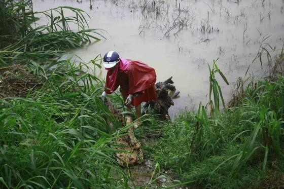 Người dân Quảng Ngãi liều mình vớt củi giữa dòng nước lũ ảnh 2