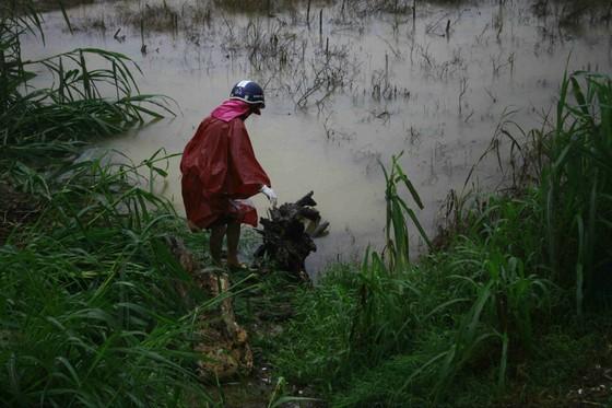 Người dân Quảng Ngãi liều mình vớt củi giữa dòng nước lũ ảnh 3
