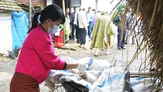 Kiểm tra nguyên nhân cá và vịt chết trên sông Phủ, Quảng Ngãi ảnh 2