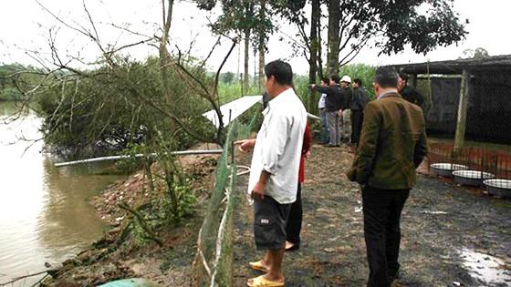 Kiểm tra nguyên nhân cá và vịt chết trên sông Phủ, Quảng Ngãi ảnh 1