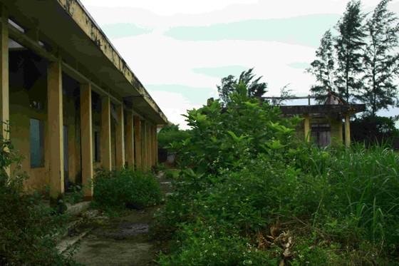 Quảng Ngãi: Khu tái định cư 11 tỷ đồng bỏ hoang 20 năm ảnh 6