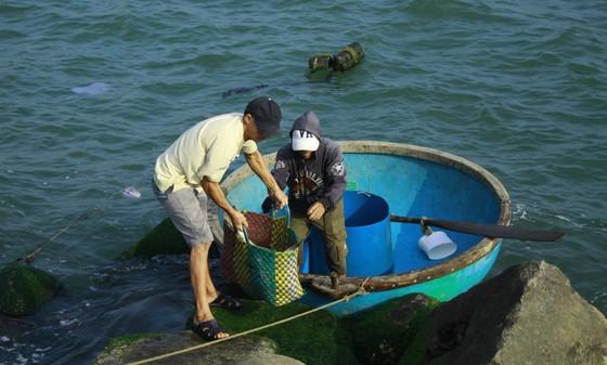 Cá 1 triệu đồng một con, người nuôi lãi lớn ảnh 3