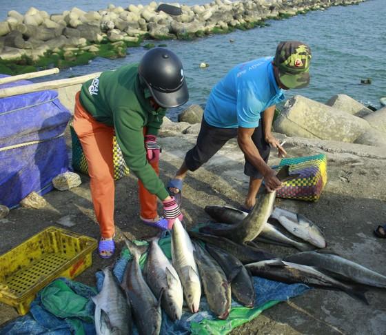 Cá 1 triệu đồng một con, người nuôi lãi lớn ảnh 4