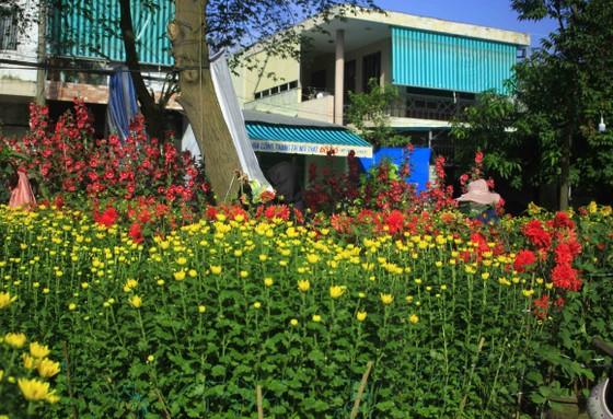 Chợ hoa tết ở Quảng Ngãi ảnh 3