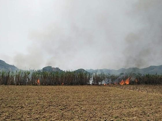 Thanh niên giúp dân thu hoạch mía bị lửa thiêu rụi  ảnh 1