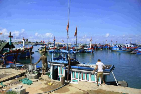 Phát hiện nhiều tàu cá tận diệt thủy sản trong Khu bảo tồn biển Lý Sơn ảnh 1
