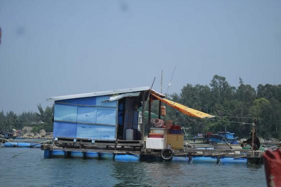 Quảng Ngãi yêu cầu chấm dứt nuôi cá lồng bè tự phát ở khu vực biển và sông Trà Bồng ảnh 1