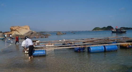 Quảng Ngãi: Chi hỗ trợ cho các hộ nuôi cá trong vùng biển Dung Quất ảnh 2